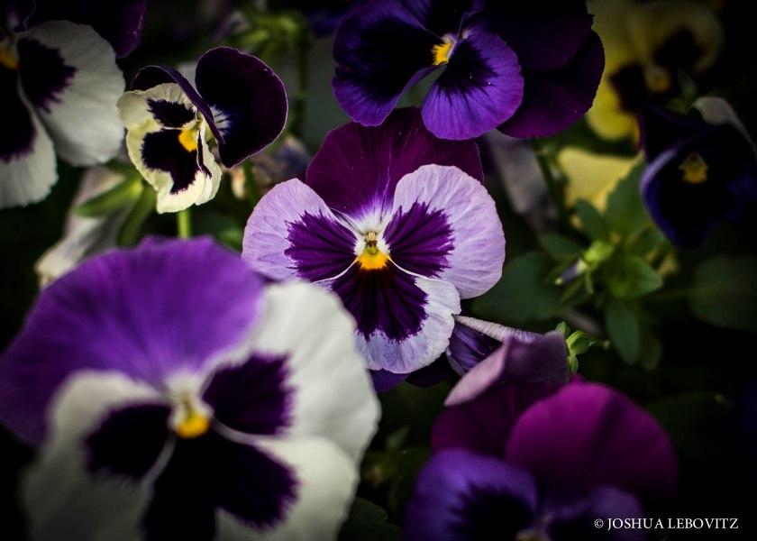FlowersInABox_07062019WM.jpg